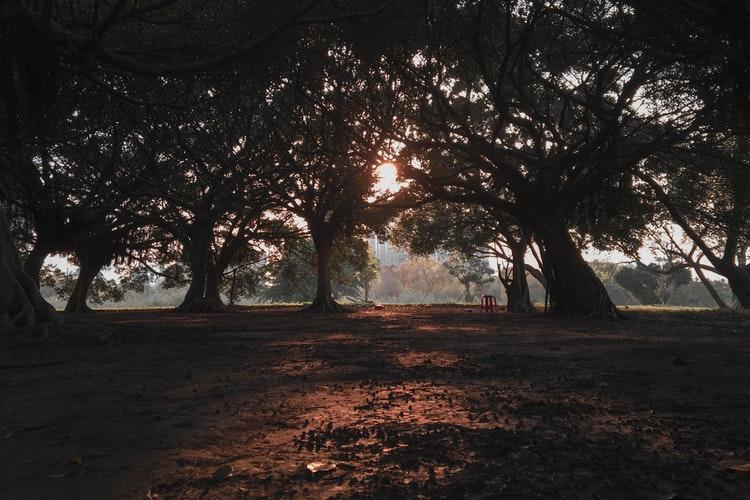 Encliffe park