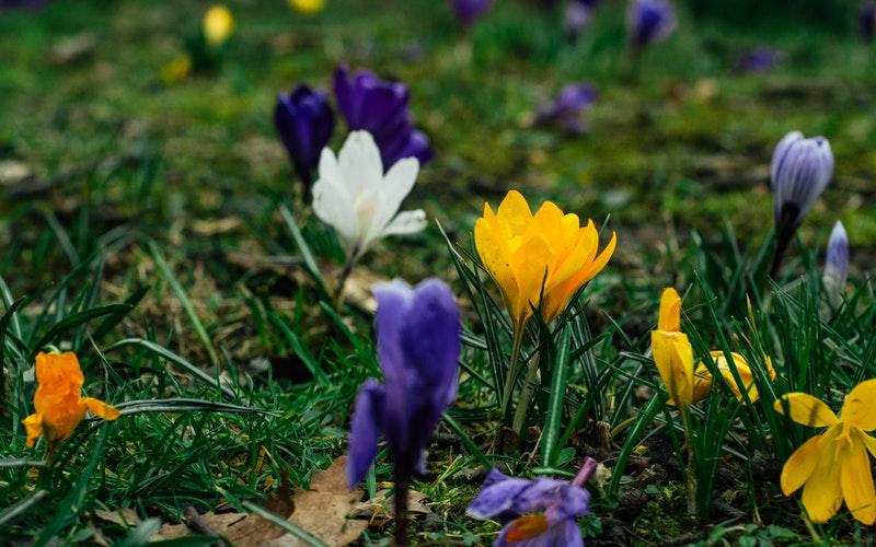 Sheffield flowers