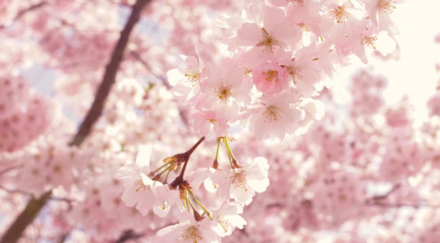 bloom-blooming-blossom-2099737