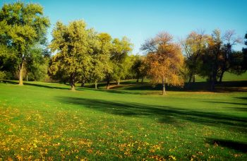 trees-grass-lawn-park-2336